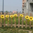 1Pc Home Garden Fence Decor Fake Flower Vivid Big Artificial Sunflower Bluelans