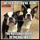 BOSTON TERRIER 4 x 3 FUNNY The Russians Pooped in the Hallway Magnet