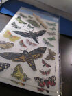 Dover Butterflys Rub on transfers sealed pack of 2 sheets 101312