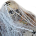 Halloween Decor Spider Web Stretchable Cobweb with 2 Spiders Home Party Props
