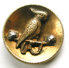 BB Antique Brass Cup Button Chained Parrot w/ Cut Steel Accents - 9/16