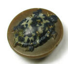 BB Antique Composition Button Turtle Design 11/16