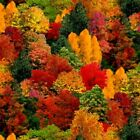 Landscape Medley Fall Colored Trees Autumn Leaves Cotton Fabric Fat Quarter