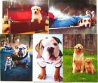 From the Dog or For the Dog Lover FATHERS DAY CARD Avanti
