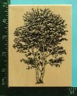 Large BIRCH TREE Rubber Stamp by PSX K 1454