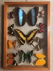 Large BUTTERFLY COLLECTION IN DOUBLE GLASS FRAME VINTAGE ECUADOR 11 Beauties
