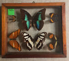 BUTTERFLY COLLECTION IN DOUBLE GLASS FRAME VINTAGE ECUADOR Piece 6 Butterflies