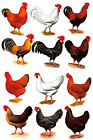 12 Rooster Hen Select Size Waterslide Ceramic Decals Bx