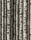Timeless Treasures Nature/Outdoors C3572 Birch Trees  Cotton Fabric BTY