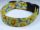 Charming Blue with Yellow Sunflowers Dog Collar