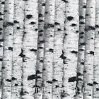 Still Of The Night Fabric Silver Metallic Birch Trees Premium Cotton Hoffman