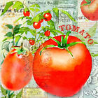'Green Grocer Tomatoes' by Jill Meyer Graphic Art on Wrapped Canvas