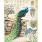 Vintage Peacocks I by Tre Sorelle Studios Poster Frame 20 x 16 x 1.5 in.