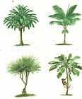 4 Palm Tree Coconut Monkey 3 Waterslide Ceramic Decals Tx