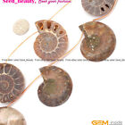 25-30mm Beautiful Conch Fossil Gemstone For J ewelry Making Loose Beads 7pcs