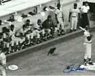 RON SANTO Signed Chicago CUBS BLACK CAT 8X10 PHOTO with JSA COA