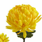29 Chrysanthemum Artificial Flower Yellow Home Decor Nearly Natural Set Of 12
