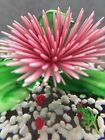 ART GLASS ROUND PAPERWEIGHT WITH FROGS UNDER FLOWERING LILLY PAD HANDBLOWN EUC