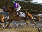 CALIFORNIA CHROME 2014 146th Belmont Horse Racing 8 x 10 Photo Race