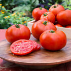 10 - 100+ Better Bush Hybrid Tomato Seeds - Red Globe - Bush