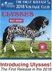 Breyer Collectors Club 1st 2018 Release Ulysses Decorator Andalusian Stallion