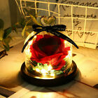 WR Enchanted Forever Rose Flower In Glass Dome Birthday Valentines Day Gifts