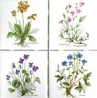 Botanical Herb Ceramic Tile 425 x 425 Primula Officianalis set of 4 Flower