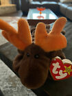 RETIRED Ty Beanie Baby CHOCOLATE MOOSE. Perfect For Collectors- No Known Errors.